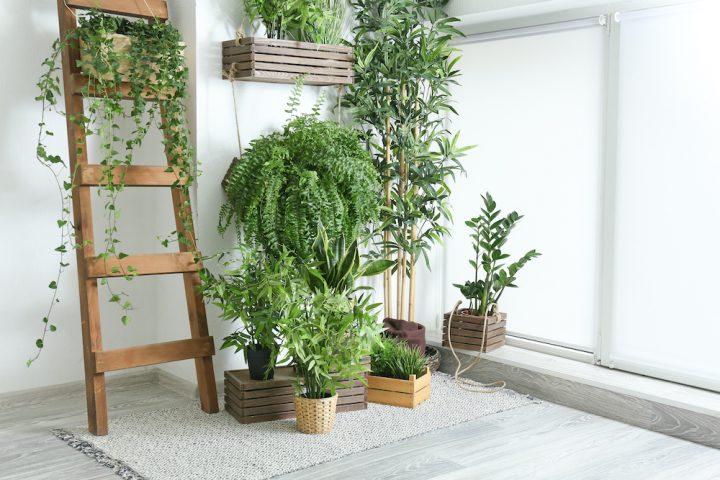 Cultiver des plantes d'appartement